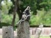 en de aapjes natuurlijk wel!