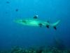 en de haaien die ik vlak bij me zag langs scheren ...