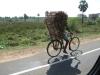 Onderweg daarheen halen we fietsers in