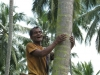 Even later zien we een kokosnotenplukker, vrolijk 'op weg' naar zijn werk