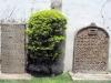 Om de kerk heen staan veel oude, interessante  grafstenen ...