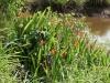 we zagen roofvogels cirkelen en mooi bloeiende planten aan de waterkant