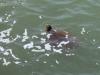 Rond het hoofdeiland ontdekken we schildpadden in zee