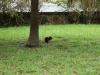 en heel veel van dit soort knaagdieren, eekhoorns??