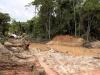 We zien hoe de goudzoekers overal het bos verrinneweren...
