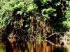 We varen langs Bijlhoutbomen (die ze hier ook Biri-hoedoe noemen) naar onze bestemming