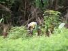 Mais, drooglandrijst, cassave: het wordt allemaal verbouwd op hun kostgrondjes