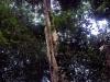 Als je de weg kwijt bent in de jungle, moet je op deze Telefoonboom kloppen, dan zoeken ze je vanuit het dorp!