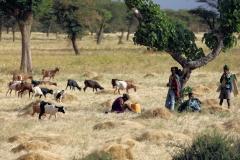 Ethiopië is dit jaar gelukkig geen 'droog' land, dieren en mensen kunnen nu eten,