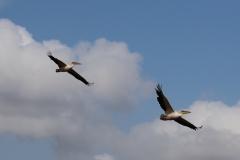 en als we dichterbij komen, vliegen die snel weg - ook een signaal voor ons om te vertrekken?