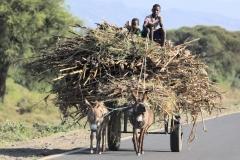 en onderweg daarheen weer respect hebben als we zien wat zulke ezeltjes presteren...