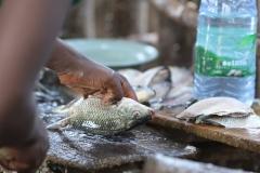 waar niet alleen vis wordt schoongemaakt,