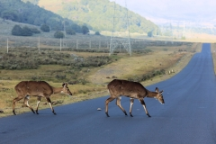 en onderweg merken we aan deze overstekers al dat we vlak langs een Nationaal Park rijden.