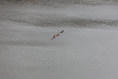 (waar we nog een paar roofvogels boven zien vliegen)