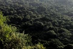 is er weer dat grootste zicht op de dichte grondwaterbossen van het Nech Sar Nationale Park.