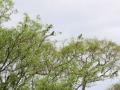 122 en ook parkieten en papegaaitjes vluchten voor ons uit naar hoge bomen.