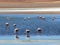 230 waar honderden James flamingo's nu hun voedsel zoeken...