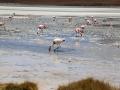 232 Verder is hier behalve die flamingo's niets dan water, zout en algen - Maar wàt een wereld,