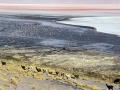 240 Maar voor het zo ver is, kijken we hier eerst nog naar erg veel voorbijtrekkende lama's,