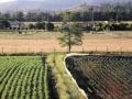 348 Maar het wordt al gauw een echt land- en tuinbouwgebied
